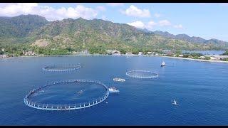 Inovasi Teknologi Perikanan Budidaya Indonesia - Keramba Jaring Apung (KJA) Aquatec