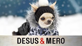 Winter Fashion for Dogs