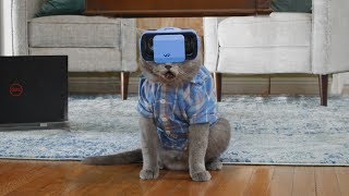 Кот Тестирует VR