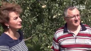 видео Cорта яблонь для Cамарской области