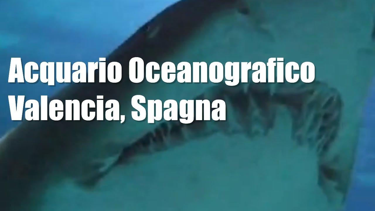 Acquario oceanografico di valencia spagna acuario for Oceanografico valencia