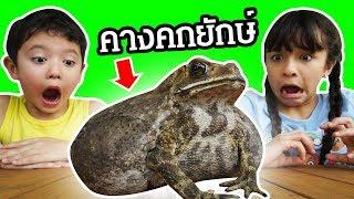 บรีแอนน่า vs คางคกยักษ์ท้องโต กระโดดเข้าบ้าน บรีจะกล้าจับไหม? | Giant Toad