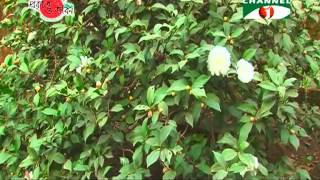 Nature And Life - Episode 107 (ornamental Climbers & Shrubs)