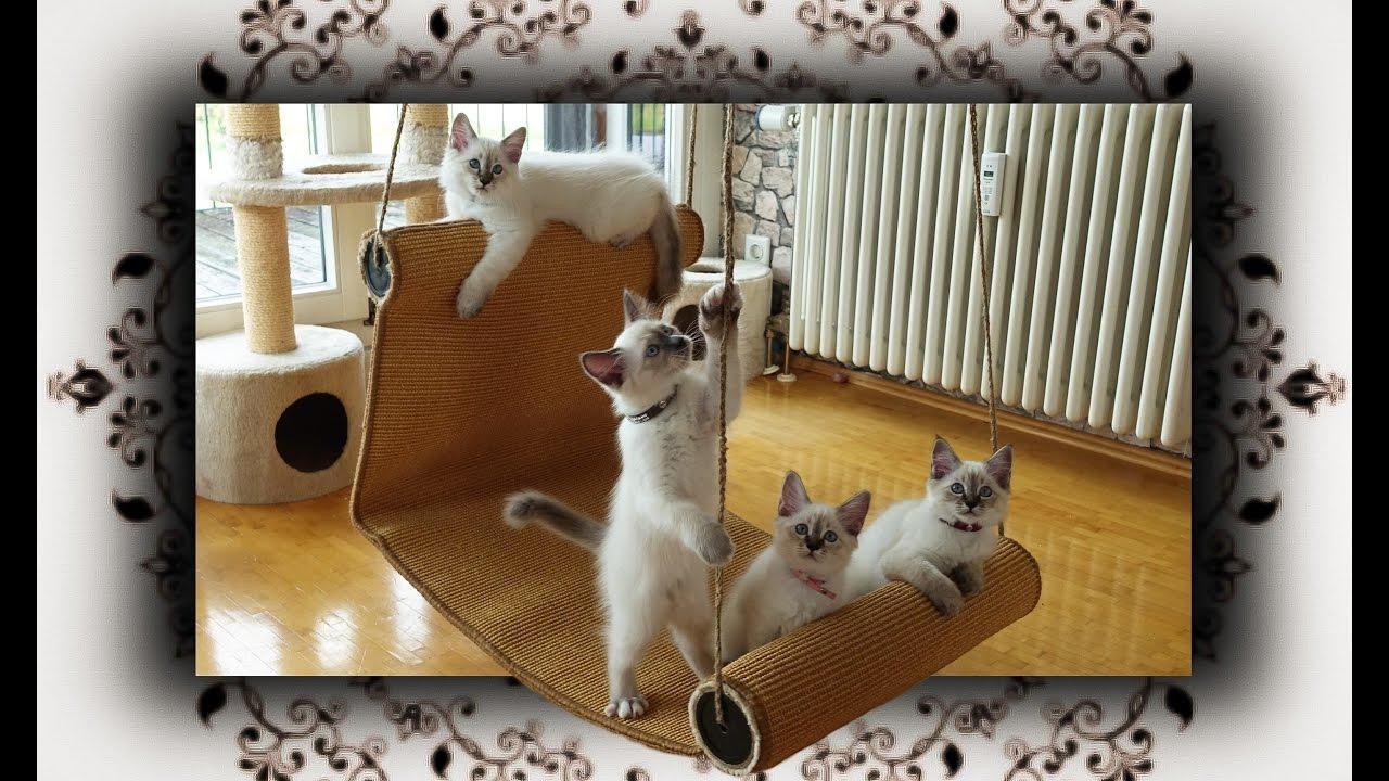 diy chaiselongue schaukel fuer katzen swing  cats