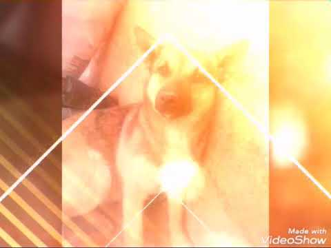 Моя Собака и Кошка. - YouTube