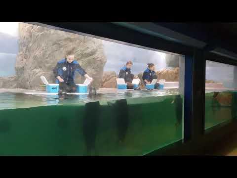 Feeding Baikal seals