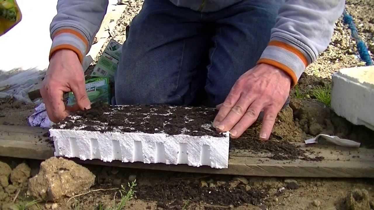 Comment semer des choux (étape1) - YouTube