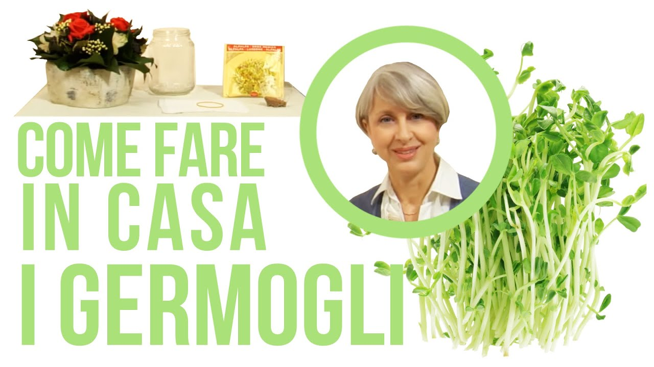 Come fare semi germogli alfa alfa in casa senza - Come fare profumi in casa ...