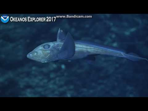 okeanos on an unnamed seamount in the Phoenix Islands Protected Area