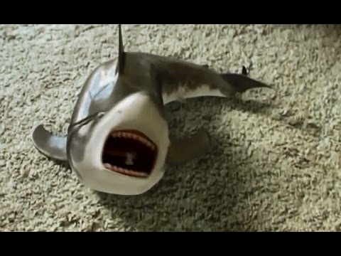 Shark toy playing again - YouTube