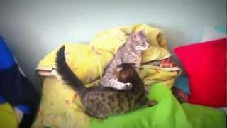 Кошка сосет грудь мамы / Cat suckles