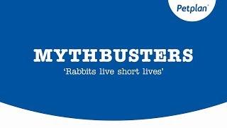How long do rabbits live? - Rabbit behaviour | Petplan