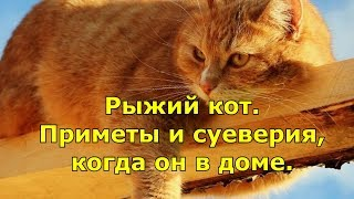 Рыжий кот. Приметы и суеверия, когда он в доме.