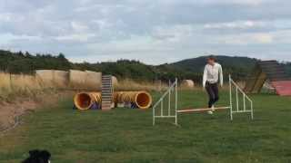 This Video Previously Contained A Copyrighted Audio Track. Due To A Claim By A Copyright Holder, The Audio Track Has Been Muted.     Hesy - Border Terrier: Agility