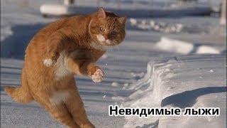 Забавные, смешные котята!