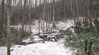 Snow at 4,600 Feet in the Smoky Mountains