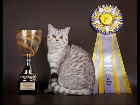 В этом разделе представлены объявления о продаже породистых котят и кошек. Вы можете купить котенка или кошку любой породы по доступной цене, выбрав подходящее объявление. Чтобы продать котенка или кошку — вы можете подать свое объявление.