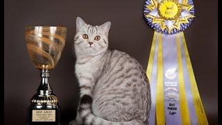 выставка кошек 2017 часть 3 абиссинские котята