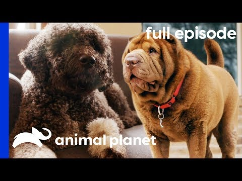 Fit Family, Fat Dog | My Big Fat Pet Makeover (Full Episode)