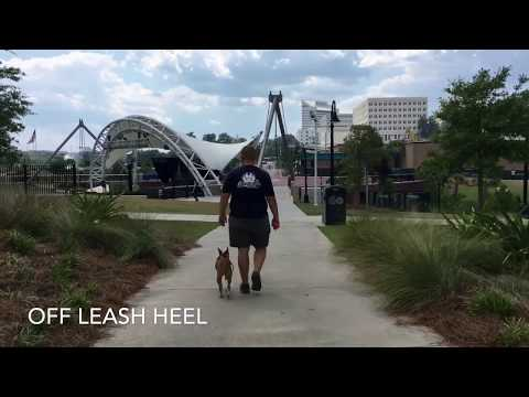 "2 Year Old Basenji Mix ""Sallie"" 