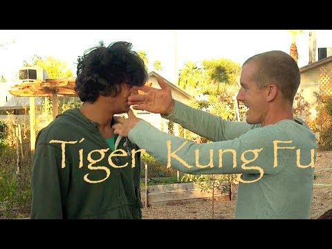 Tiger Kung Fu Combat - Top 10 REAL FIGHTING Moves of Tiger ...