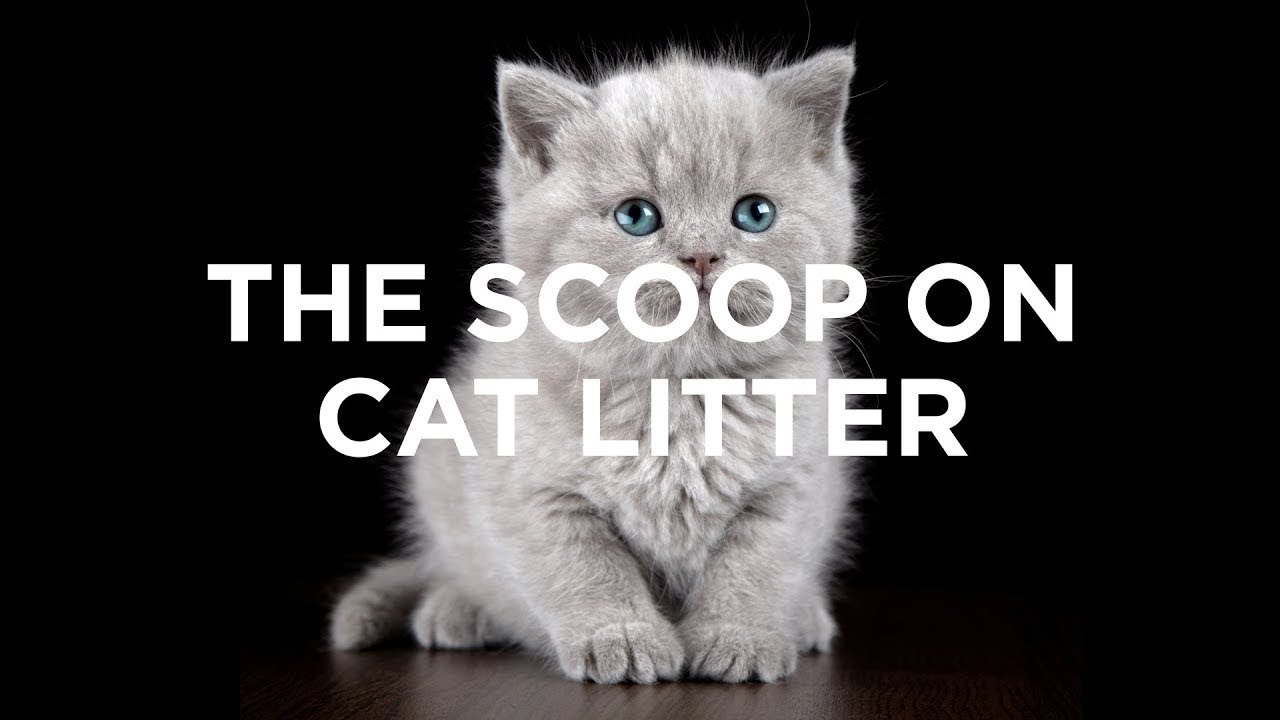 The Greenest Way to Dispose of Your Cat Litter | Sierra Club