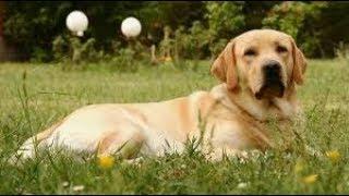Плюсы и минусы появления собаки в Вашем доме!