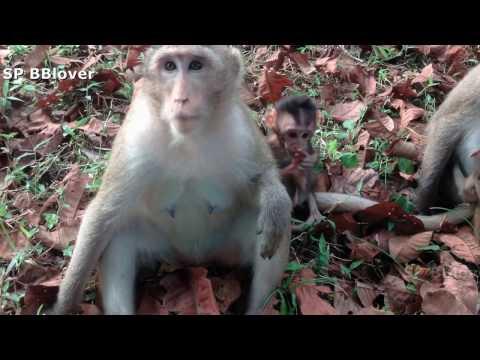 Nature Life Vivi Ep 25 - Monkey Mom Try To Wean Baby Monkey