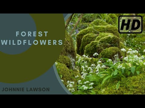 1 Hour Relaxation-Nature Sounds-Birds Singing-Mindfulness Meditation-Sound of a Forest