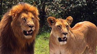 Najnebezpečnejšie svet zvierat! Top 10 najnebezpečnejších zvierat na svete!