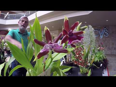 ORCHIDS, & EXOTIC PLANTS FESTIVAL