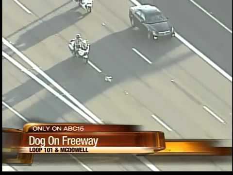 Highway Police Officer Chases Dog Loose on Freeway