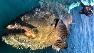 Monster Goliath Grouper 500 LBS with Chew on This - HD by Catfish World