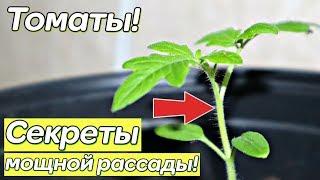 Не сажайте помидоры на рассаду пока не посмотрите это видео! Секреты посева томатов!