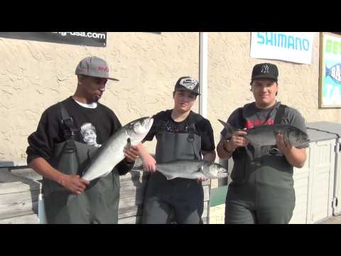 5 15 15 Adrian, Dorian and Anthony Many Blues to 13 Pounds