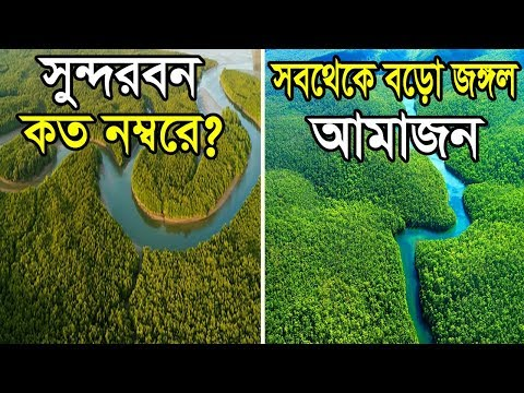 /Top 10 Largest Forest in The World