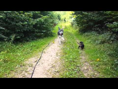 A Day In The Life of A Moogles Dog Walker