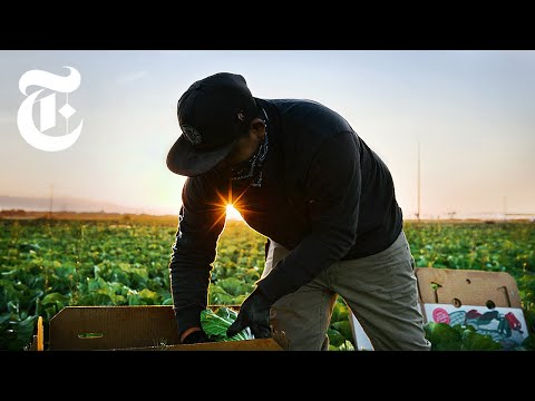 'Essential' Farmworkers Risk Infection and Deportation. Here's Why.   Coronavirus News