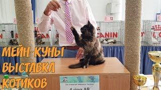 Выставка котов, Мейн-кун, и самые необычные кошки 💚
