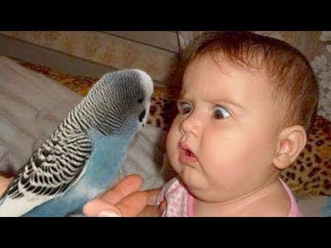 Cute Babies and Parrot are Best Friend -  Funny Parrots Videos