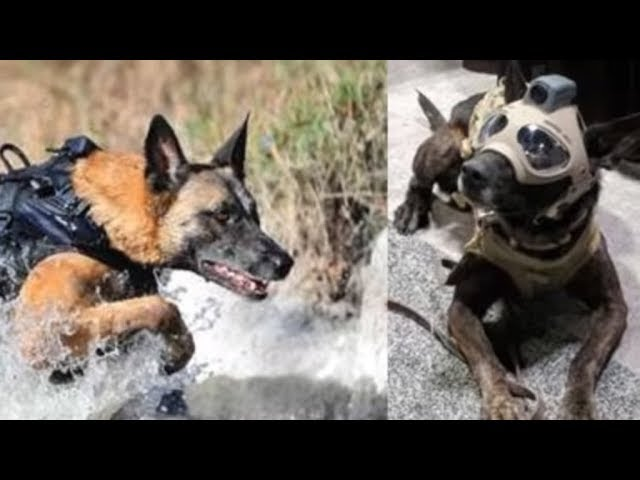 Dogs With The Coolest Jobs