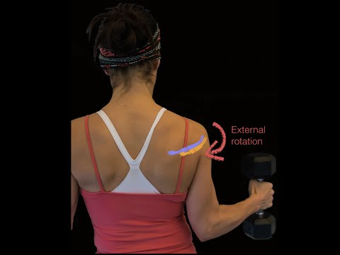 Rotator cuff muscles and deltoid muscle