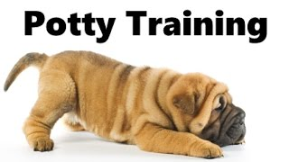 How To Potty Train A Chinese Shar-Pei Puppy - Chinese Shar Pei Training Tips - Shar Pei Puppies