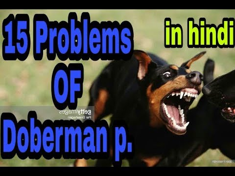 15 Problems OF Doberman pincher in hindi || problems of dogs ||