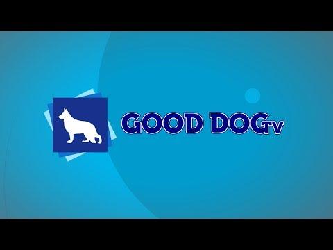 Good Dog TV: November 7, 2018