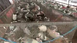 Tamilnadu Rabbit Farms Tiruvannamalai 8825 7685 93