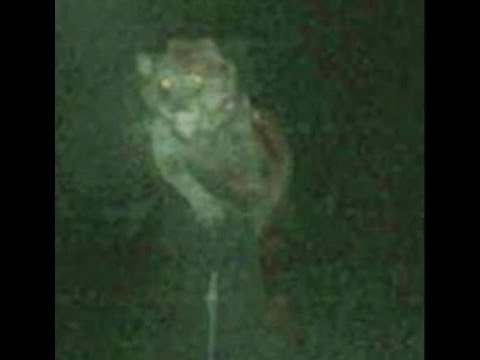 Download VERY SCARY REAL WEREWOLF CAUGHT ON SECURITY CAM