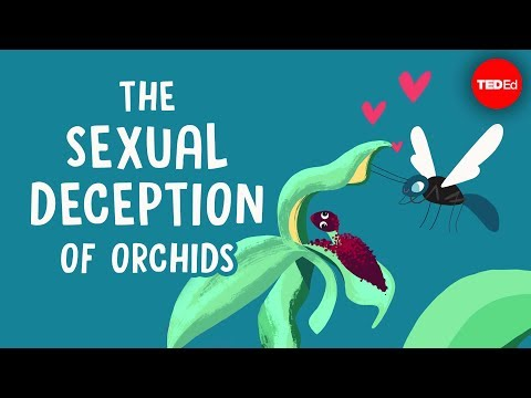 Video image: The sexual deception of orchids - Anne Gaskett