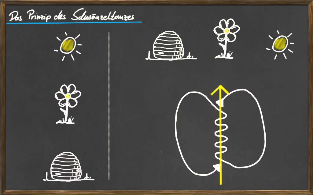 08 Die Sprache der Bienen - YouTube