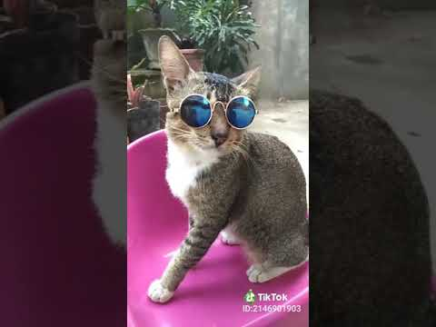 Unduh 64+  Gambar Kucing Pakai Kacamata Keren Paling Keren
